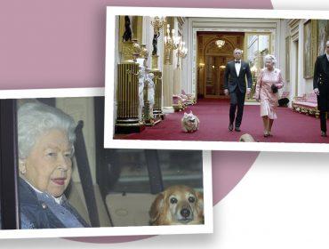 Novos cãezinhos da Rainha Elizabeth podem ajudar a monarca após a morte de Príncipe Philip. Saiba mais!