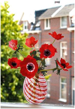 Flores que não morrem