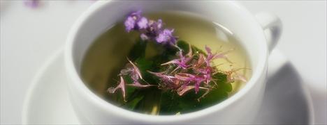 Natura lança produtos com base de erva cidreira
