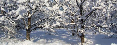 Cuidados de inverno