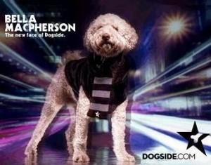 """Bella Macpherson, a cachorrinha de Elle Macpherson, que acabou de ser anunciada como o """"novo focinho"""" da grife Dogside."""