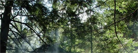 Natura ganha prêmio por campanha consciente