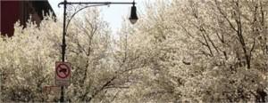 Confira no canal Nova York as novidades da primavera.